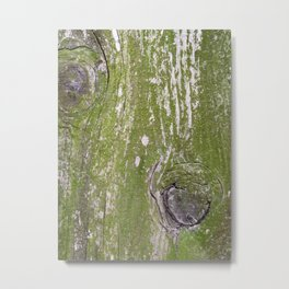Green lichens on wood Metal Print