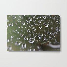 A Spiders Wet Capture Metal Print