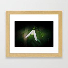 Snowdrop Framed Art Print