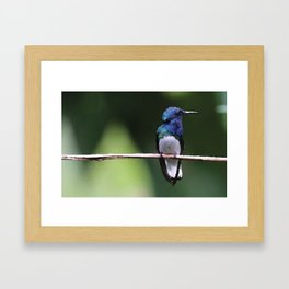 Kolibri Design Ilustration Framed Art Print