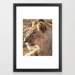 Asiatic Lion2, Gir Forest, Gujrat, India Framed Art Print