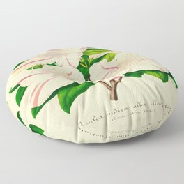 Azalea Alba Magnifica (Rhododendron indica) Vintage Botanical Floral Scientific Illustration Floor Pillow