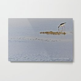 The Birds of Cutler Bay Wetlands Metal Print