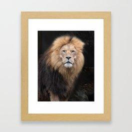 Closeup Portrait of a Male Lion Framed Art Print