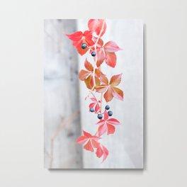 Rustic Berry Vine in the Fall Metal Print