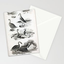 002 Fulmar Stormy Petrel Wandering Albatross Chinese Goose Red Breasted Goose Barnacle Goose Black Swan Tame Swan9 Stationery Cards