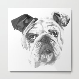 Portrait Of An American Bulldog In Black and White Metal Print