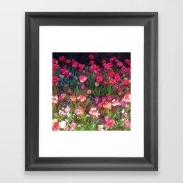 Field of Tulips Framed Art Print