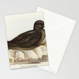 Fleshy-footed Petrel (Puffinus carneipes) illustrated by Elizabeth Gould (1804-1841) for John Goulds Stationery Cards
