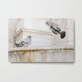 Photo of Pigeon Birds on the Forum Romanum in Rome I, Italy | Fine Art Colorful Travel Photography | Metal Print