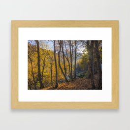 Oaks in the morning Framed Art Print