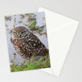 Searching for Clarity Stationery Cards