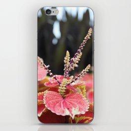 Fall II iPhone Skin