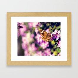 Buckeye Framed Art Print