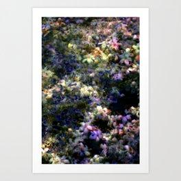 Wild Flower exposures Art Print