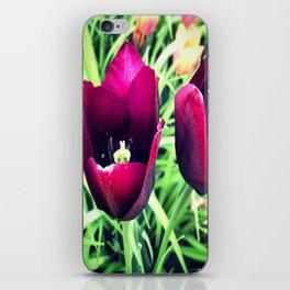 Purple Tulips in Bloom iPhone Skin