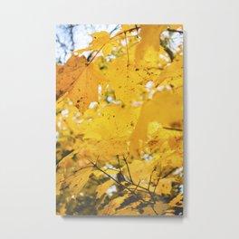 Amber Leaves, I Metal Print