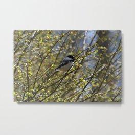 Chickadee Perch Metal Print