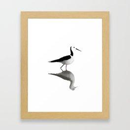 Pied Stilt Framed Art Print