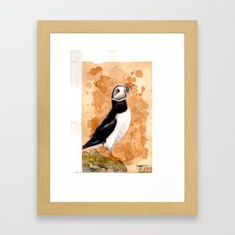 Atlantic puffin Framed Art Print