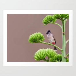 Red tailed little bird Art Print