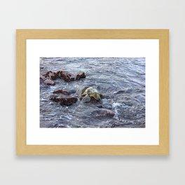 turtlebutt Framed Art Print