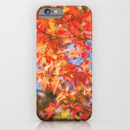 Autumn foliage in a maple tree at Kinkaku-ji Zen garden in Kyoto iPhone Case