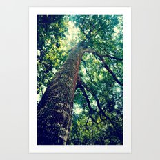 lookingup2 Art Print