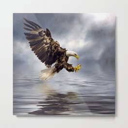 Young Bald Eagle Swooping Metal Print