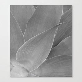 Agave Succulent Photographic Print Canvas Print
