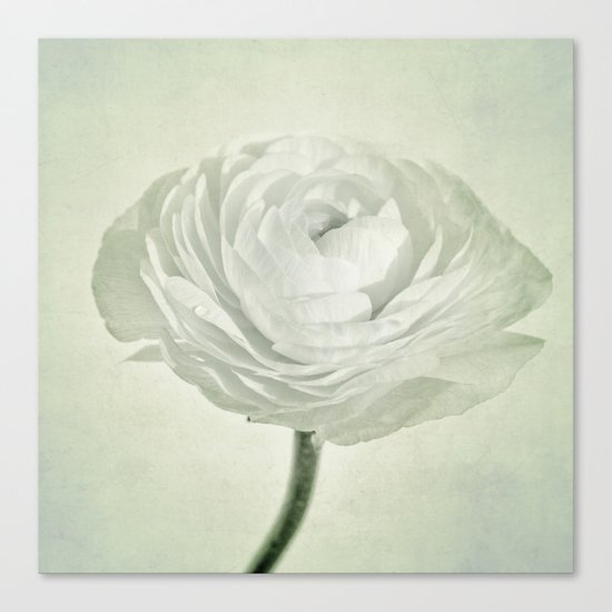 whity Canvas Print