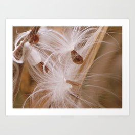 Autumn Milkweed Seeds Art Print