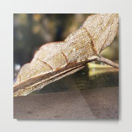 Frost, dew and sunlight Metal Print
