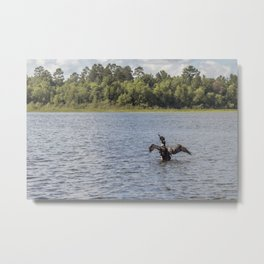A Common Loon Fishing in the Summer Metal Print