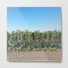 Swanton Berry Farm, Santa Cruz Metal Print