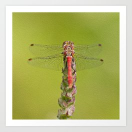The red dragonfly Art Print