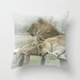 Sleeping Lions Throw Pillow