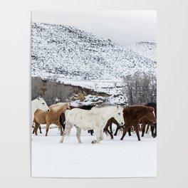 Carol Highsmith - Wild Horses Poster