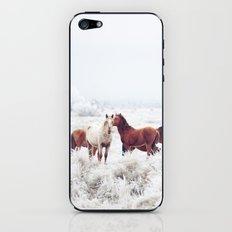 Winter Horseland iPhone & iPod Skin