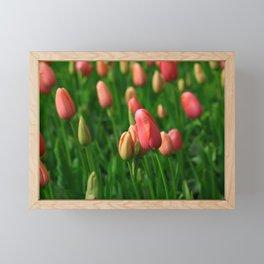 Field of Romantic Blooming Tulips in Keukenhof Framed Mini Art Print