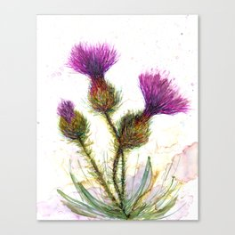 Three Thistles Canvas Print