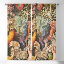 Ernst Haeckel Sea Anemones Vintage Illustration Blackout Curtain