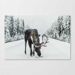 Moose in the wild Canvas Print