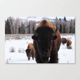 Little Bison Canvas Print
