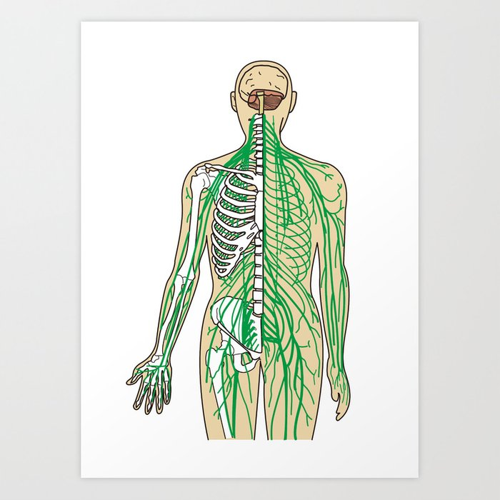 Human Neural Pathways Art Print By Factorie Society6