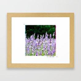 Summerhouse Lavender Farm Framed Art Print