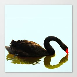 Chengdu Black Swan  Canvas Print