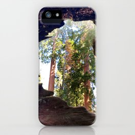 View of Giant Sequoias from Inside a Fallen Sequoia iPhone Case