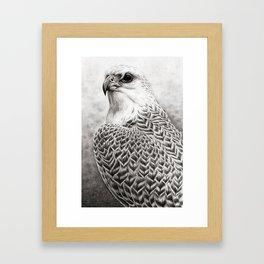 The Gyrfalcon Framed Art Print