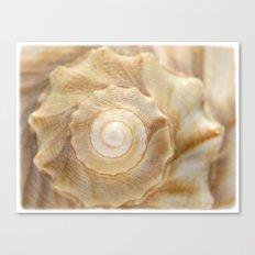 Lightning Whelk Seashell Canvas Print